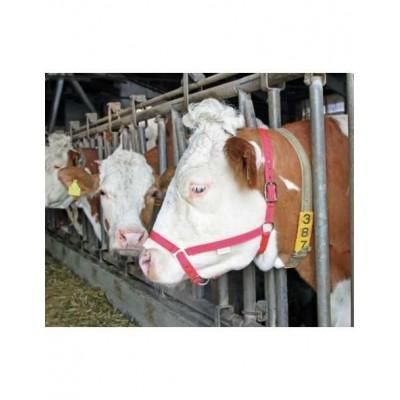 Ohlávka pre kravu farebná